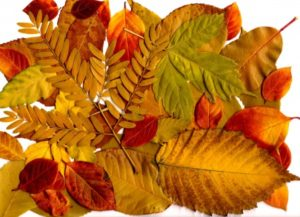 autumn-leaves-collage-600x434